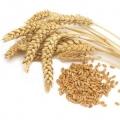 Зерно и зерновые изделия