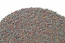 Семена брокколи, 100гр